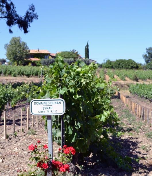 domaines bunan vinstock